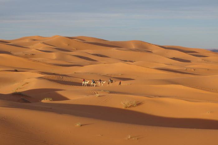 Camel Ride Morocco, Auberge Café du Sud