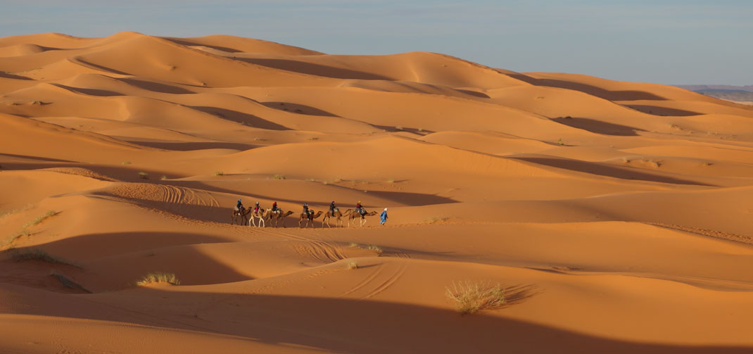 Camel trekking excursion in the desert